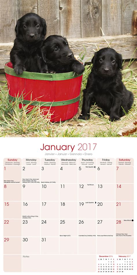 flatcoated retriever calendar 2017 flat coated retriever calendar 2017 10092 17 dog breeds