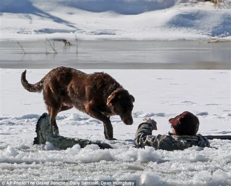 loyal puppy loyal guards his master after he falls through on the colorado river daily