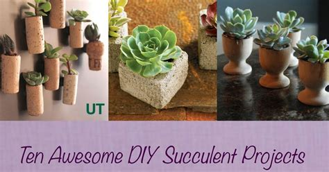 diy succulent projects succulent project up confessions of a secret crafter