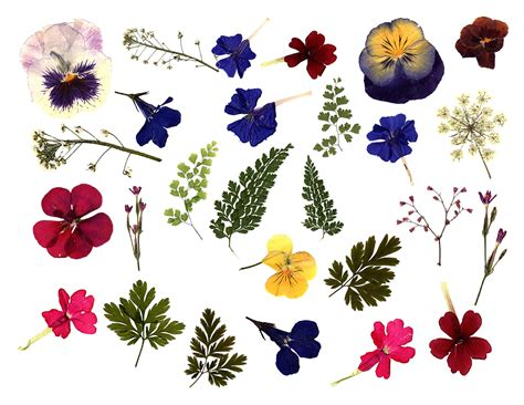 printable real flowers digital clipart flowers transparent png digital graphics made