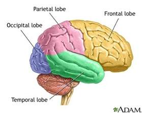 psychlopedia central nervous system