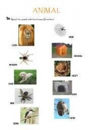 animal homes teaching worksheets animal homes