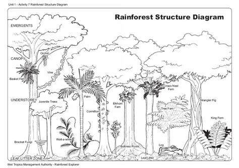 rainforest diagram rainforest structure tropics management authority