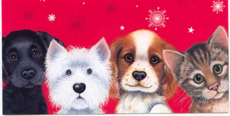 Christmas dogs and cats images amp pictures becuo