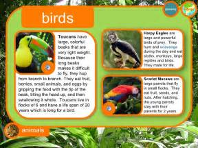 How Do Jaguars Adapt To The Rainforest Rainforest Interactive For 3rd Grade