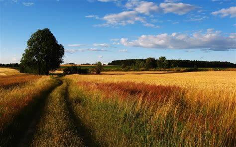 hd landscapes nature trees fields roads high resolution