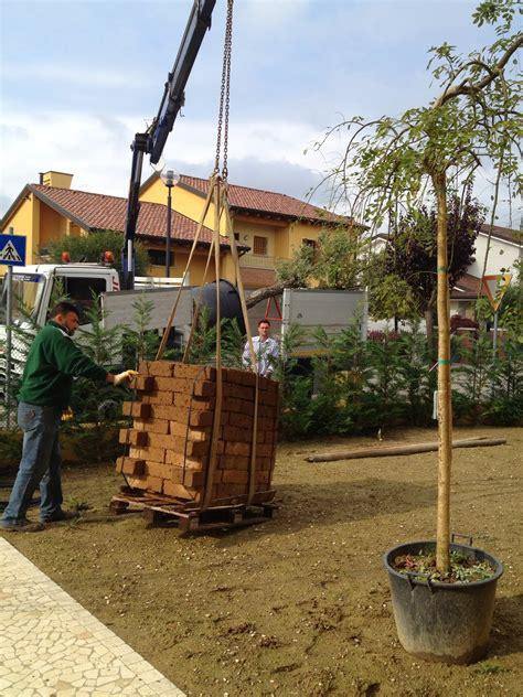 realizzazioni giardini realizzazione giardino a pianiga zinato vivai