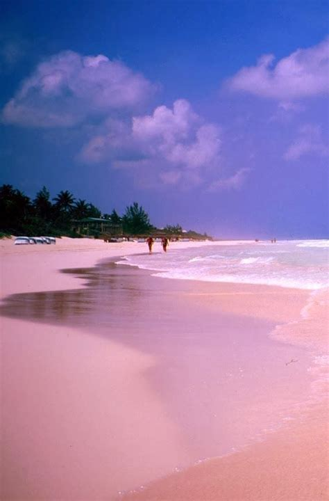 pink sand beach 25 best ideas about pink sand beach on pinterest pink
