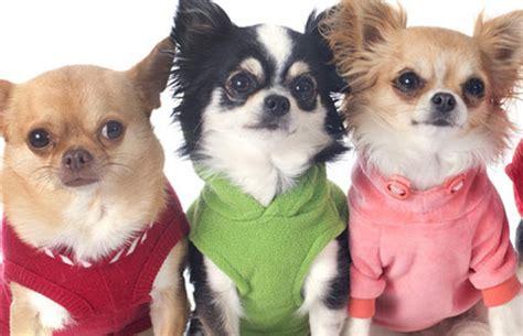 catalogo mascotas el corte ingles cat 225 logos de ropa para perros el blog de el corte ingl 233 s