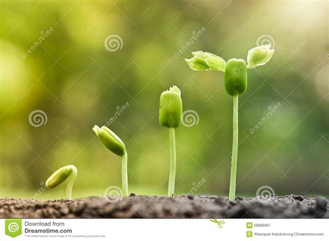 baby plants plant growing sequence related keywords plant growing