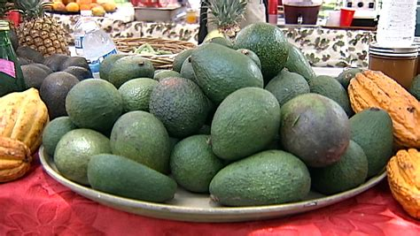 Hilo Avocado Hawaii Avocado Festival Held In Kona