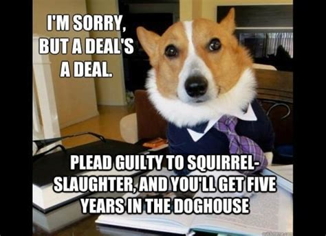 Law Dog Meme - lawyer dog meme goes viral legal cheek