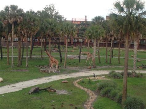 savannah view picture of disney s animal kingdom lodge
