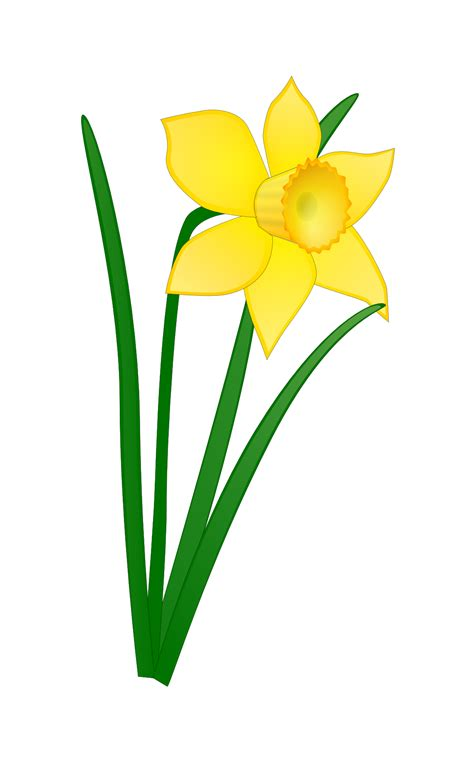 Narcisuss Hitam popular symbols