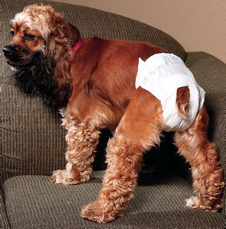 dogs in diapers disposable diapers for dogs housetraining incontinence