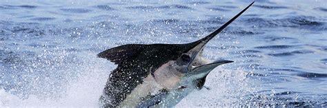fishing boat charter seychelles seychelles boat charters fishing island toursseychelles