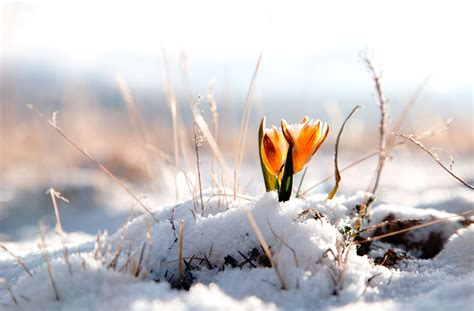 Wall Images Hd by Photo Collection Flowers Wallpapers Winter
