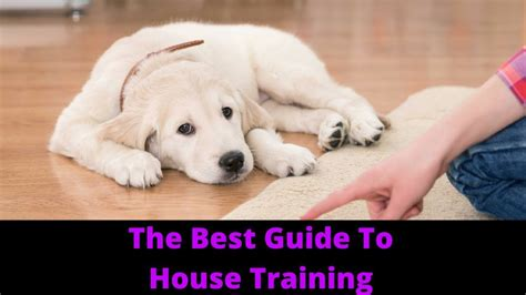 how to house train a small dog how to house train a puppy and potty train your dog youtube