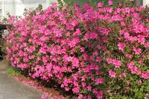 flower bush by earthemerald on deviantart
