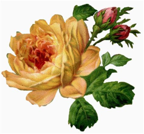 what do different color roses sweetly scrapped free digital image roses in different