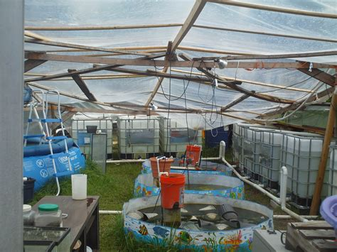 aquaponics system crayfish best ponic