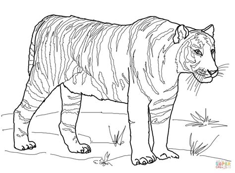 coloring pages siberian tiger tigers printable coloring pages az coloring pages
