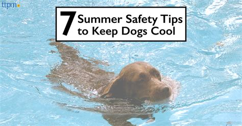 7 Summer Safety Tips by Ttpm Blogs 7 Summer Safety Tips For Dogs Ttpm Blogs