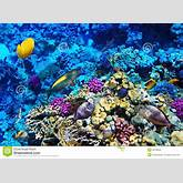 ... And Fish In The Red Sea. Egypt, Africa. Stock Photo - Image: 28749550
