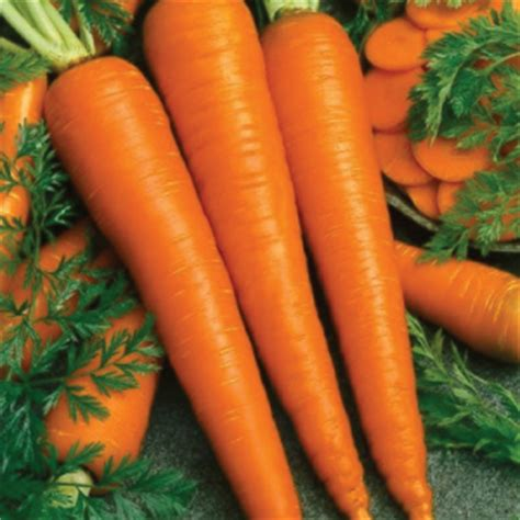 manfaat orgasme bagi wajah dan kesehatan wanita bimbingan manfaat wortel untuk kulit wajah bimbingan