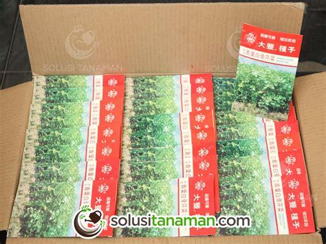 Benih Daun Seledri seledri celery 10g bibit benih tanaman sayur
