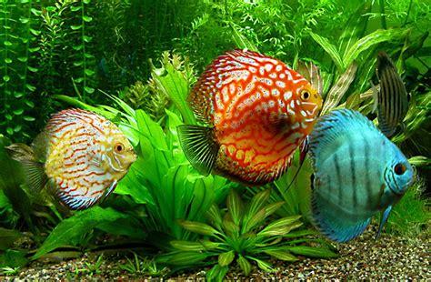 Lu Hias Dan Nya jenis ikan hias air tawar terlengkap yang mudah dipelihara