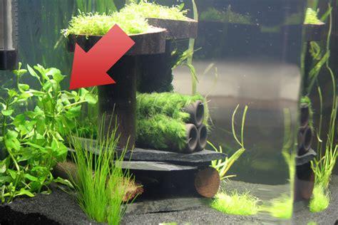 Lu Led Aquazonic ludwigia palustris wasserpflanze in gr 252 n wuchert jetzt