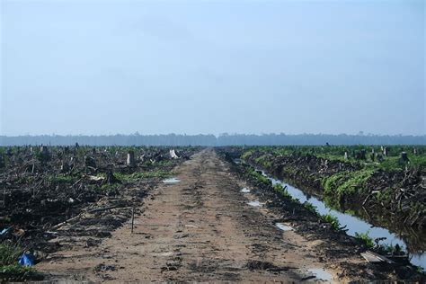 Amazon Wikipedia Indonesia | deforestation in indonesia wikipedia