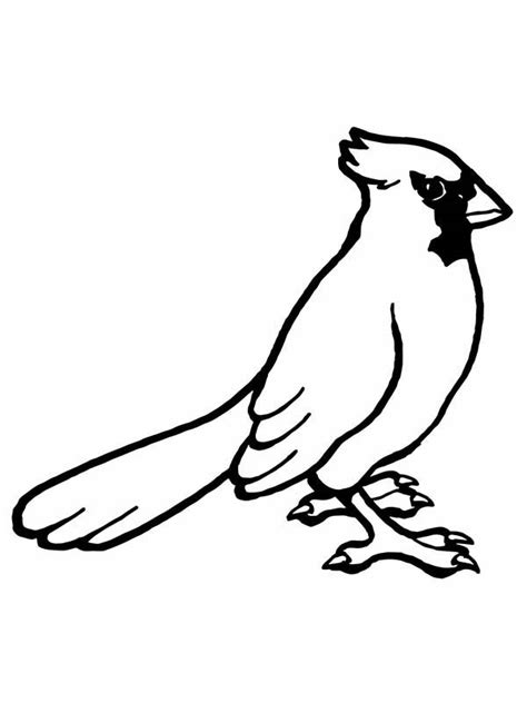 cardinal coloring page cardinal drawing