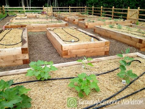 Raised Bed Vegetable Garden Irrigation Ideas Photograph Ep How To Set Up A Vegetable Garden Bed
