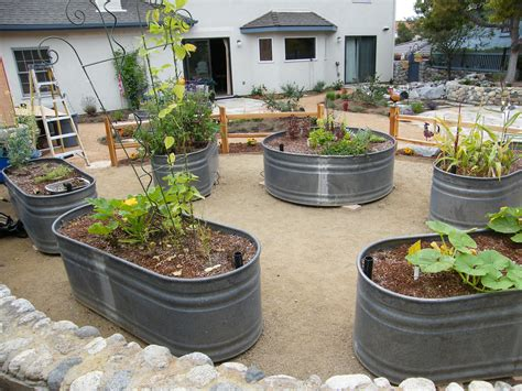 Stock Tank Garden by Stock Tanks Used As Raised Vegetable Beds Gardening Stock Tank Gardens And