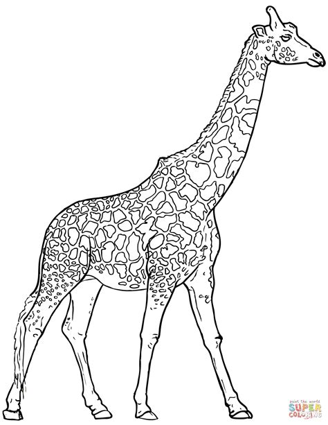 what color are giraffes realistic giraffe coloring page free printable coloring