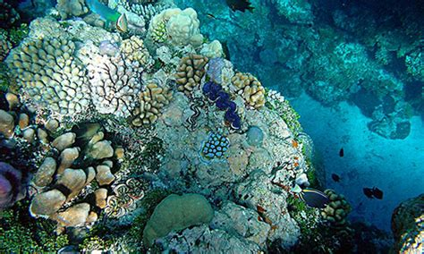 coral reef crustaceans from sea to papua books importance of coral reefs a knowledge archive