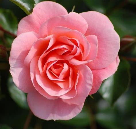 floreros para una flor las mejores flores para la primavera y el verano