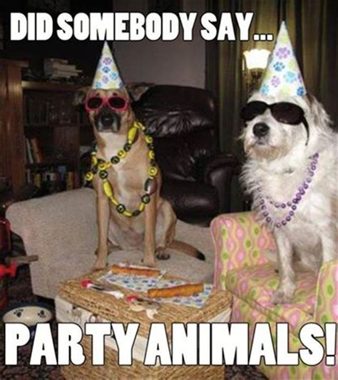 Party Animal Meme - did somebody say party animals memes and comics