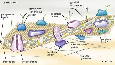 carbohydrates location in cell unique characteristics of prokaryotic cells microbiology