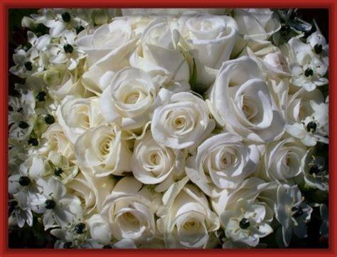 imagenes de rosas blancas hermosas imagui imagenes de rosas blancas hermosas archivos imagenes de rosa