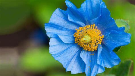 Beautiful Blue Flower Weneedfun Blue Flower