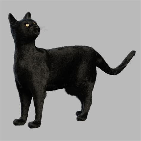 black cat fur turbosquid