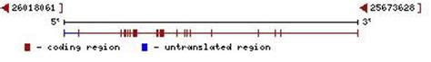 p protein oca2 sandwalk human oca2 gene is responsible for eye color and