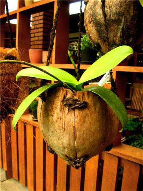 Harga Pot Anggrek Tanah Liat rumah bunga rizal