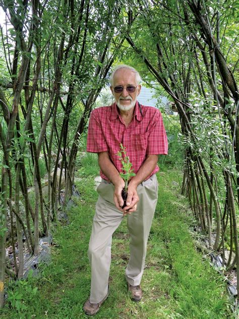 michael dodge horticulturalist michael dodge has a thing for willows