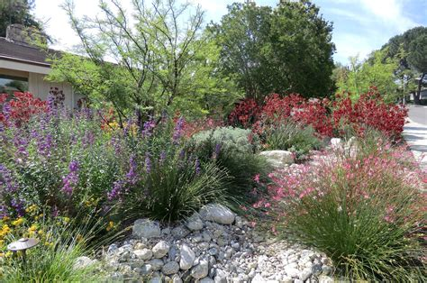 california native plant gardening and landscaping have tremendous positive impacts to our