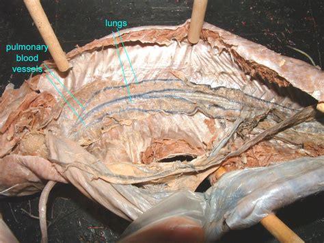 Lung Exclusive L 1 untitled document bio sunyorange edu