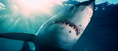 baby shark movie the best shark attacks in movies punchbaby